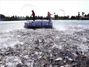 Bộ Khoa học và Công nghệ đồng hành cùng các địa phương vùng Đồng bằng song Cửu Long tìm kiếm giải pháp tổng thể để xử lý ô nhiễm môi trường ao nuôi cá tra