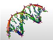 Kỹ thuật mới rọi ánh sáng vào chuỗi xoắn DNA