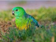 Động vật thay đổi hình dạng để thích nghi biến đổi khí hậu