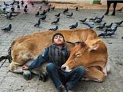 Những bất ổn trong ứng xử của con người với loài vật và nguyên do (kỳ 1)