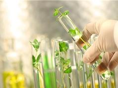Bộ KH&CN: Xây dựng cơ chế chính sách để phát triển công nghiệp sinh học ngành Công thương