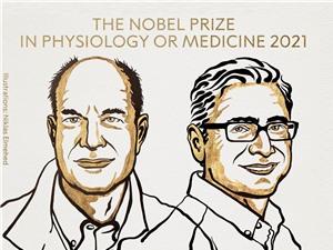 Ardem Patapoutian và David Julius giành Giải Nobel Y sinh 2021