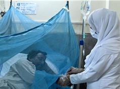 Phát hiện hợp chất điều trị sốt xuất huyết tiềm năng