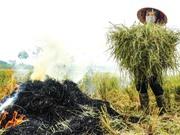 Ước tính hệ số phát thải từ hoạt động đốt rơm rạ ở Hà Nội