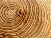 Động đất giúp cây trưởng thành nhanh hơn