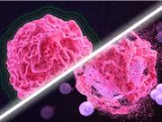 """Phương pháp điều trị ung thư mới có thể """"đánh thức"""" hệ miễn dịch"""