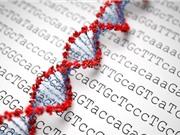 Phát hiện ra 14 gen gây béo phì